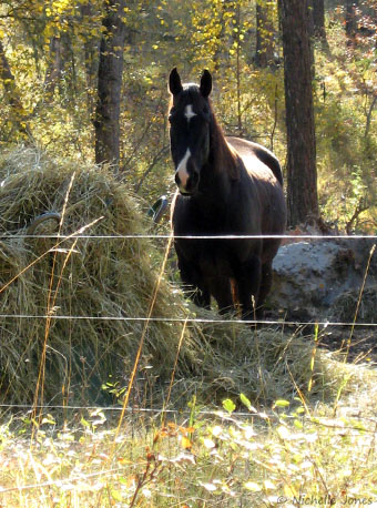 Fall_Horse