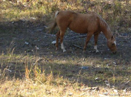 Fall_Horse2