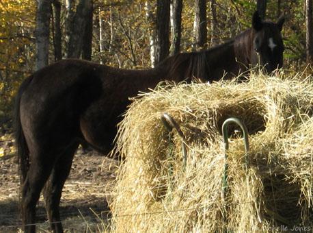 Fall_Horse3