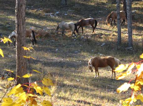 Fall_HorseHerd