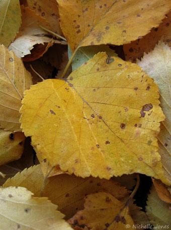 Fall_Leaves1