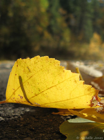 Fall_Leaves2