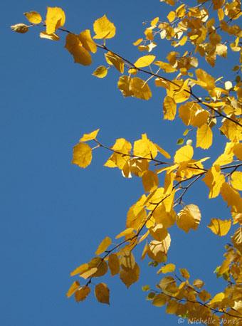 Fall_Leaves3