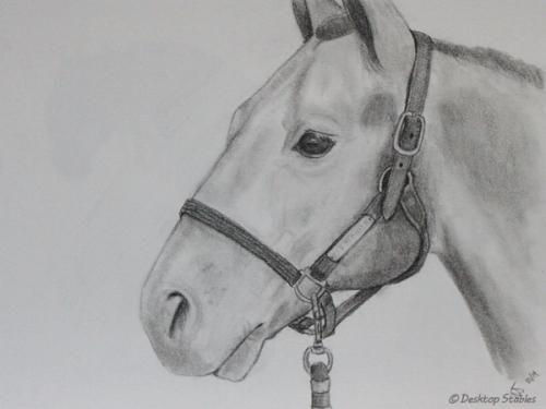 Drawing_HorseHead