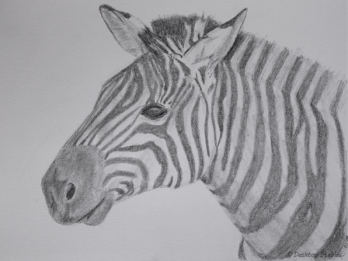 Drawing_Zebra