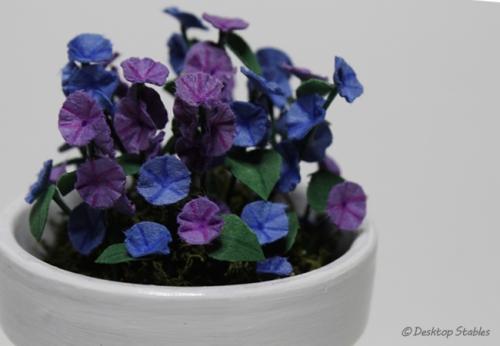 Petunias_03