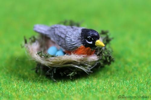 Birds011