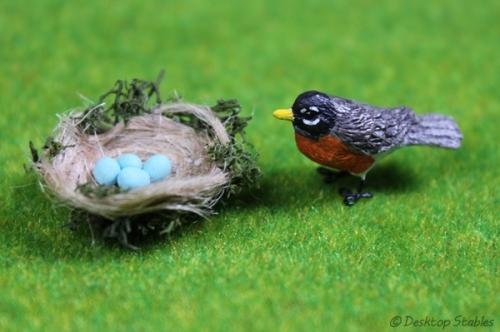 Birds012