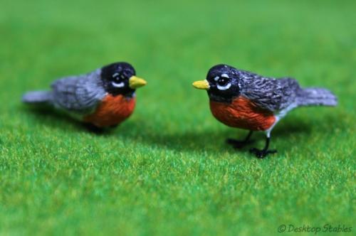Birds013