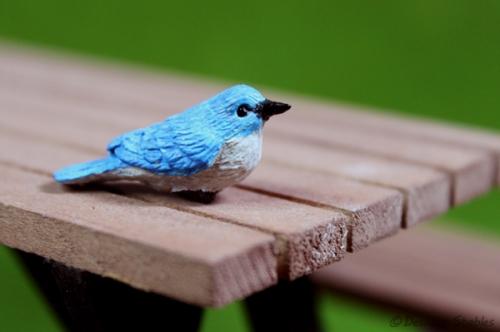 Birds07
