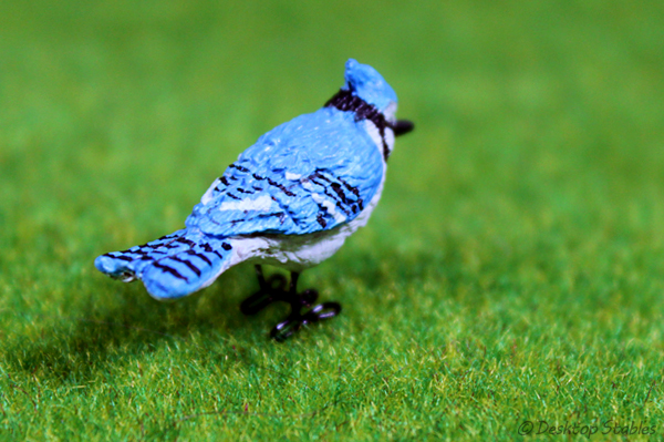 Birds08