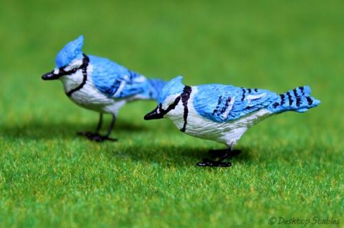 Birds09