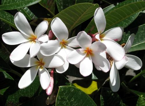 Oahu03
