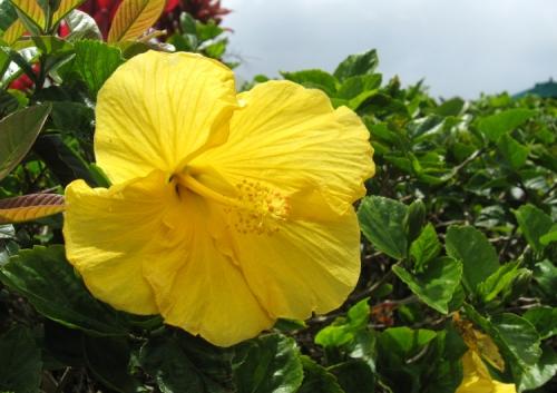Oahu09